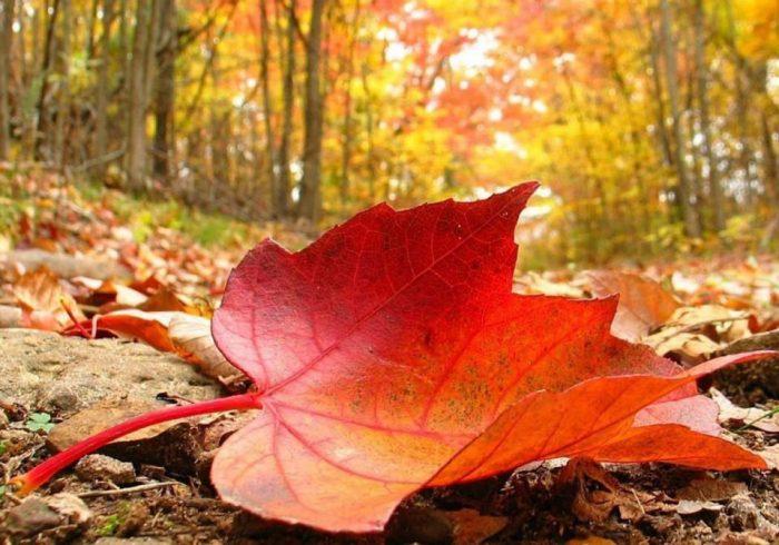 زندگی به سبک پاییز