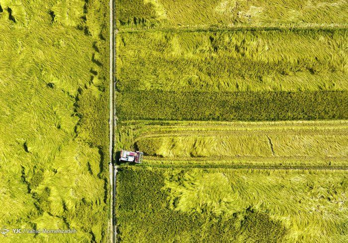 کشاورزی قراردادی راهی برای استمرار پایداری تولید