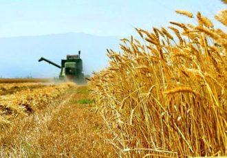 خرید تضمینی گندم به بالای یک میلیون تن رسید/ پیشبینی خرید ۸ میلیون تن گندم از کشاورزان